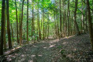 77 Trail