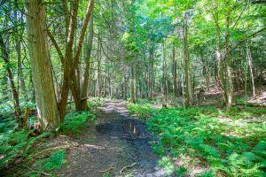78 Trail