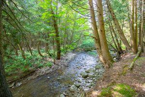 83 Trail