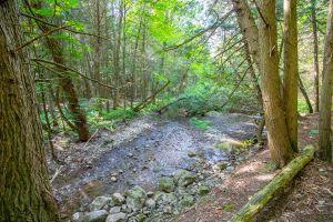 84 Trail